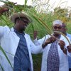 sudan grass an other fodder at Bulla Hajji